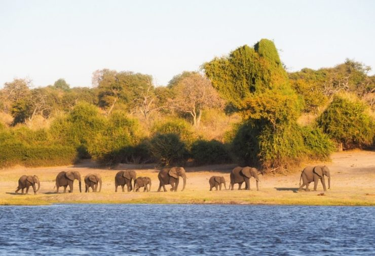Elephants in Chobe National Park - Botswana