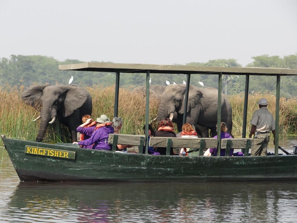 On safari at Liwonde National Park, Malawi