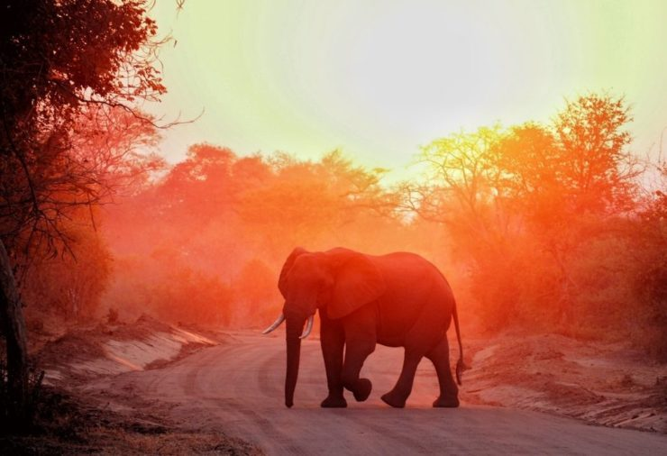 South Luangwa - One of the Best Places for Safari in Southern Africa