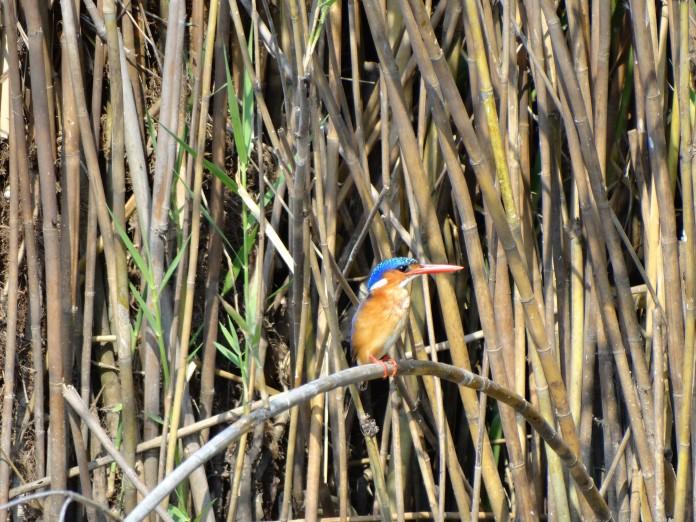 Liwonde National Park http://www.heleninwonderlust.co.uk/