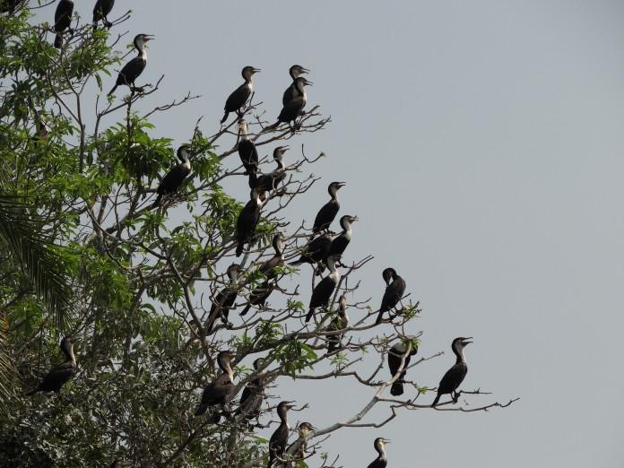 Liwonde National Park