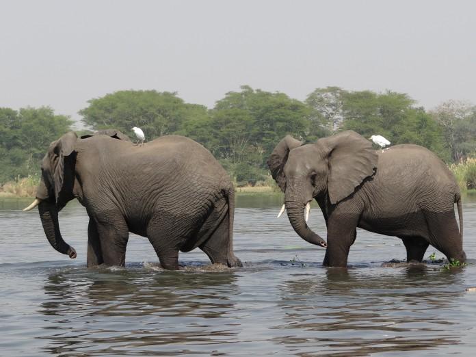 Liwonde National Park (331)