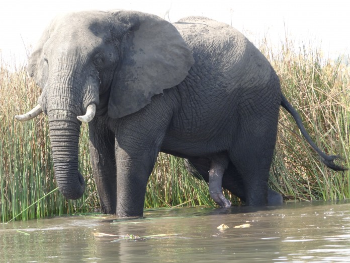 Liwonde National Park (357)