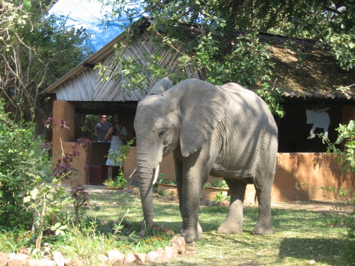 Elephants Crash Pool Party