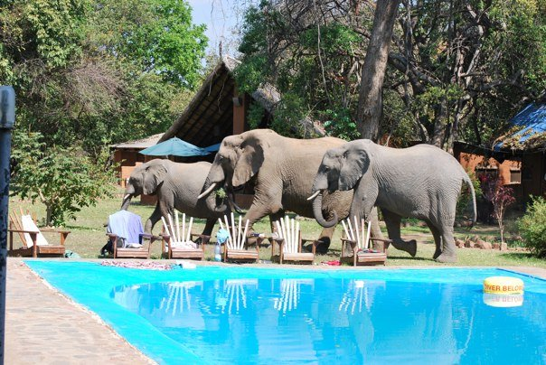 Elephants Crash Pool Party