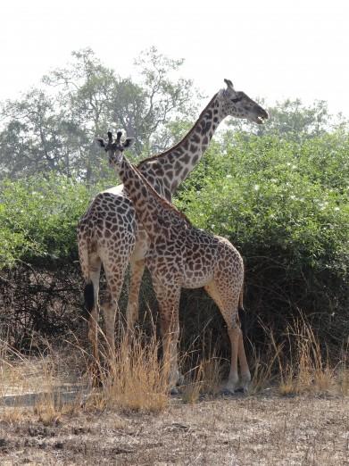South Luangwa National Park Zambia (25)
