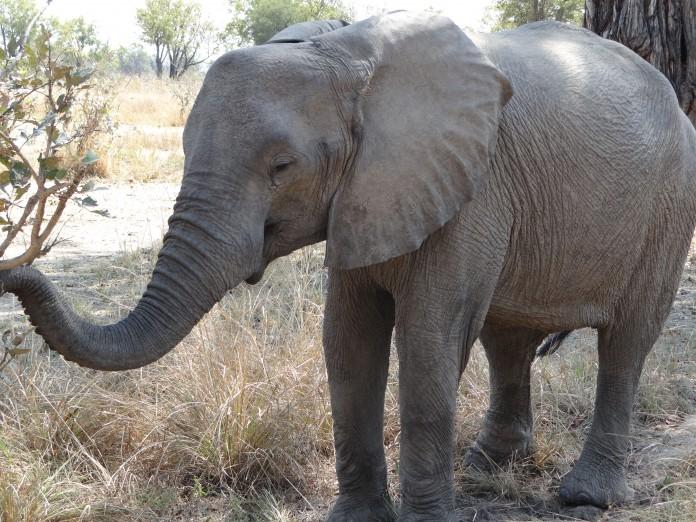 South Luangwa National Park Zambia (34)