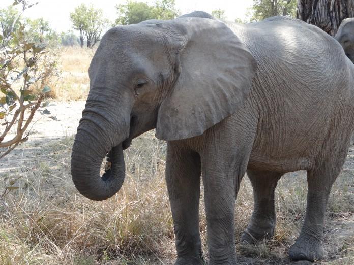 South Luangwa National Park Zambia (35)