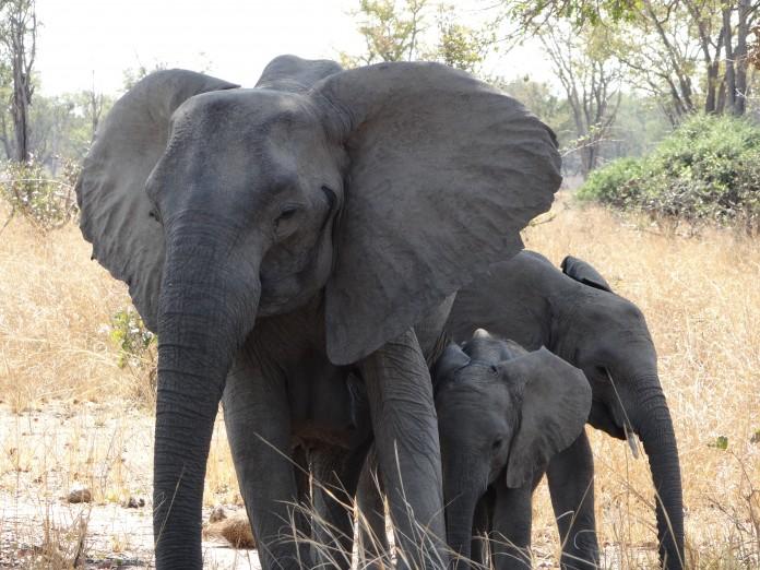 South Luangwa National Park Zambia (38)
