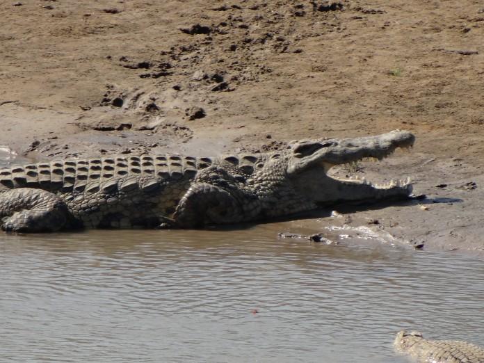 South Luangwa National Park Zambia (45)