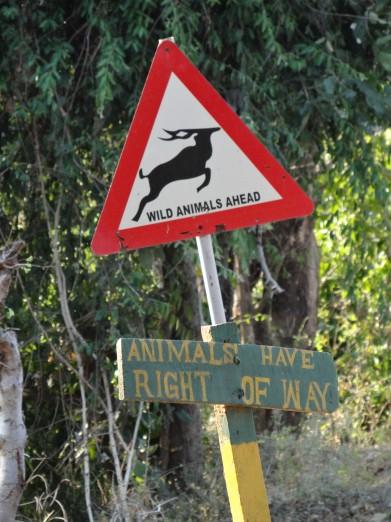 South Luangwa National Park Zambia (49)