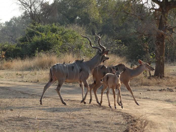South Luangwa National Park Zambia (50)