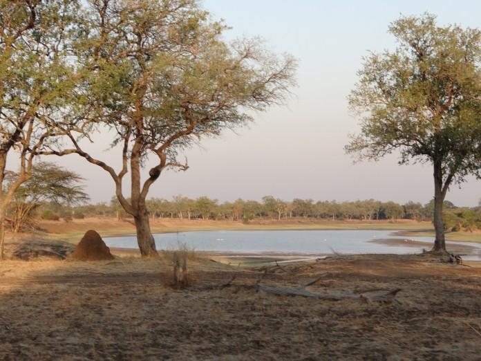 South Luangwa National Park Zambia (59)