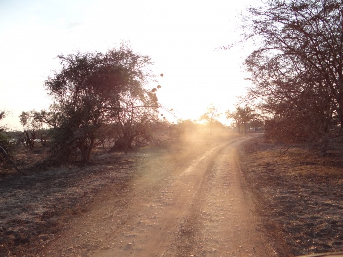 South Luangwa National Park Zambia (60)