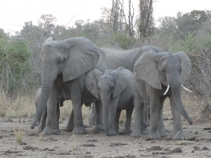 South Luangwa National Park Zambia (62)