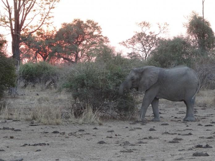 South Luangwa National Park Zambia (63)