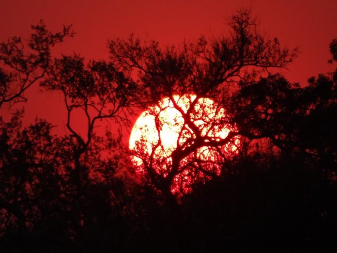 South Luangwa National Park Zambia (67)