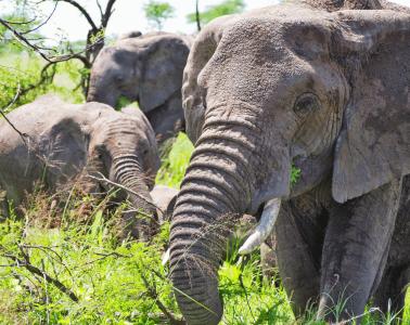 Safari in the Ngorongoro Crater