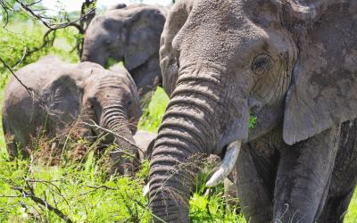 A Safari in the Ngorongoro Crater
