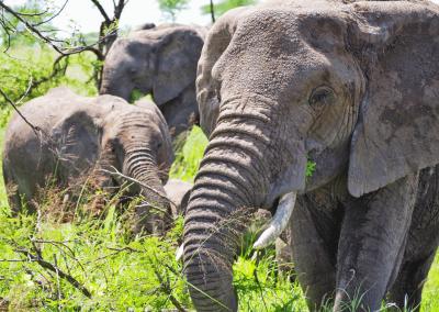 Ngorongoro Crater Feature Image
