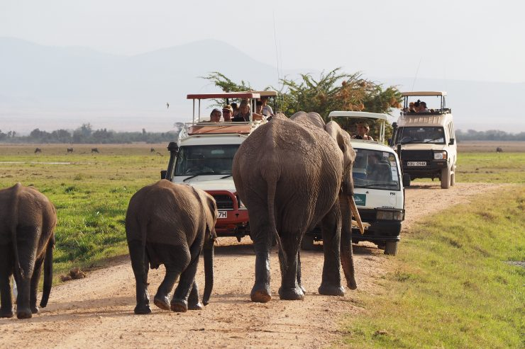 Spotting elephants on safari in Amboseli National Park in Kenya.