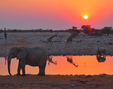 Okaukuejo Waterhole, Etosha National Park, Namibia