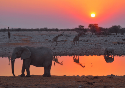 Etosha National Park Namibia Feature Image (1)
