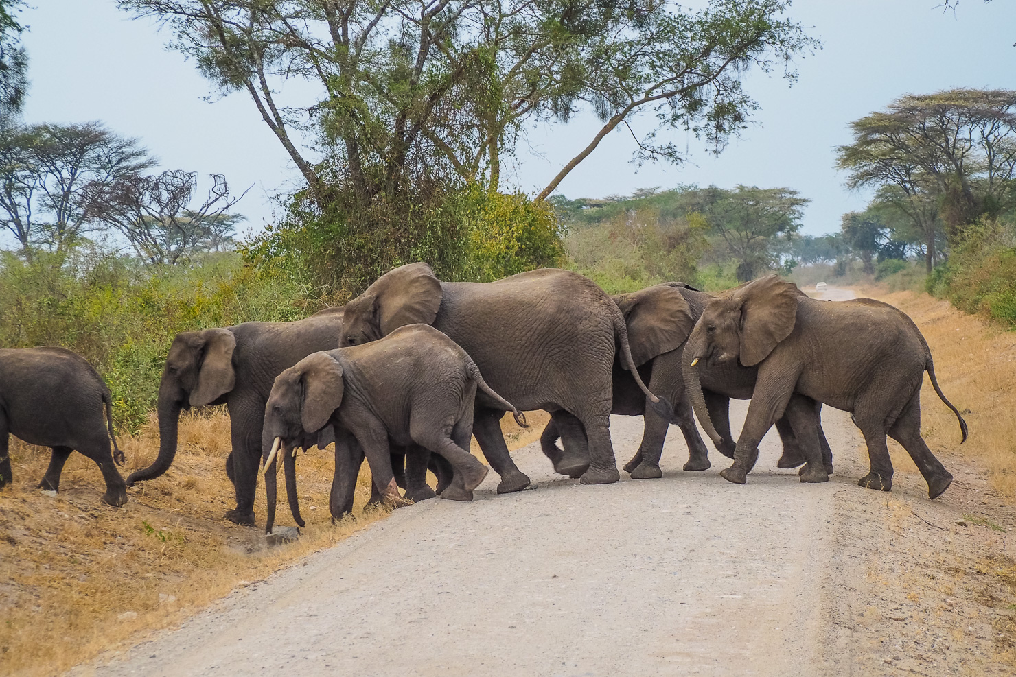 Queen Elizabeth National Park - Rock My Adventure Tours
