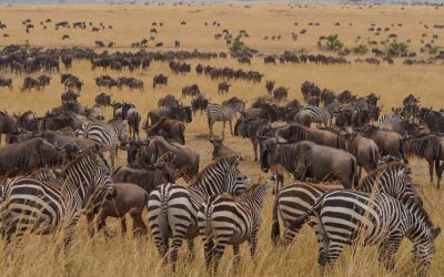 How to Find the Best Serengeti & Ngorongoro Crater Safari (to suit your budget)