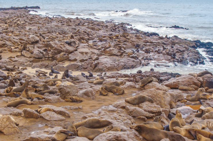Cape Cross Seal Colony, Skeleton Coast, Namibia