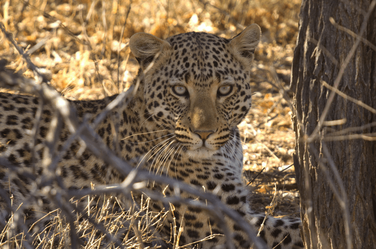 Okonjima Nature Reserve & Africat Foundation