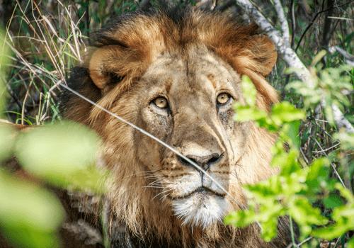Kruger National Park Tour, South Africa