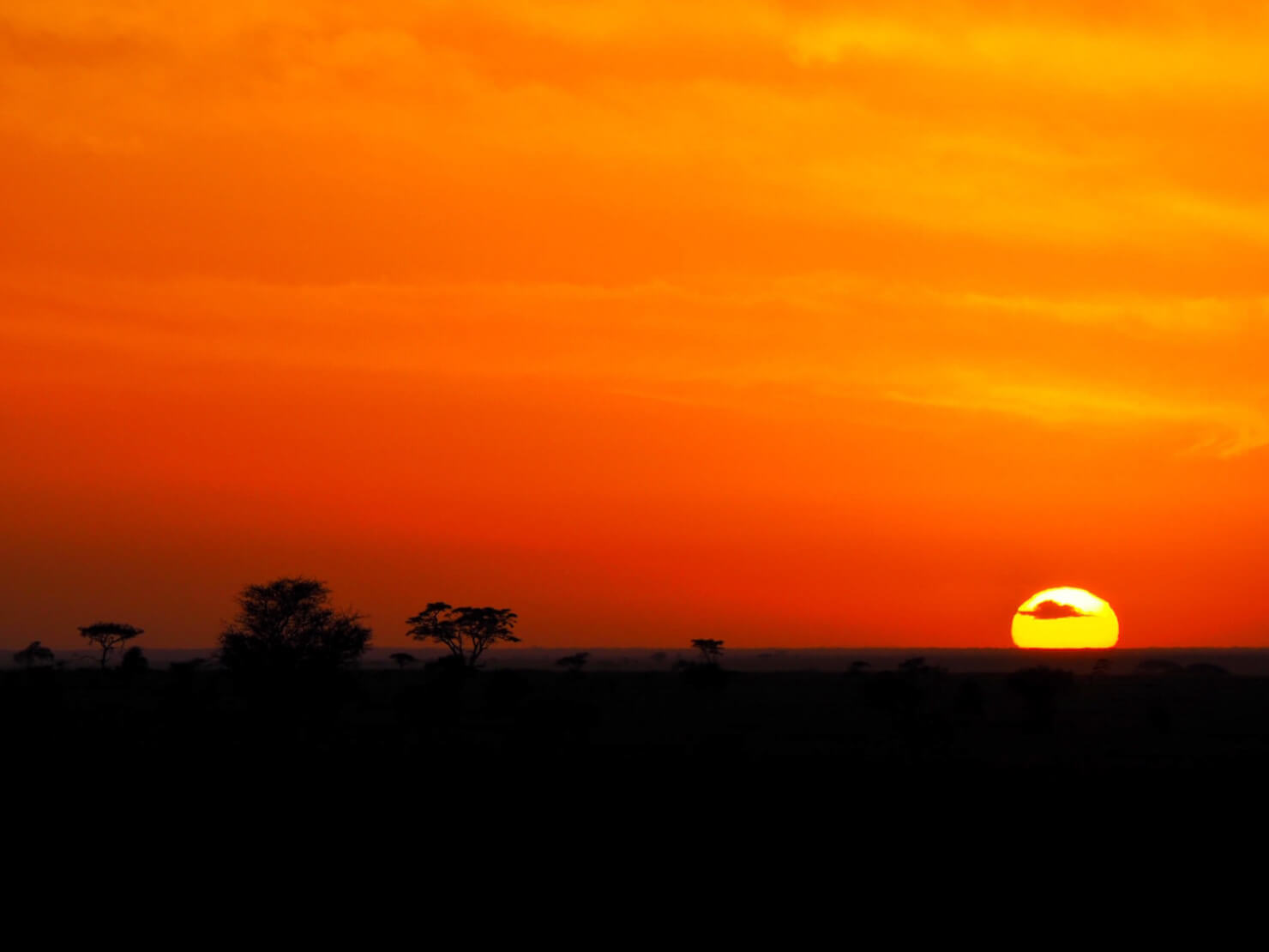Sunrise in the Serengeti - Rock My Adventure