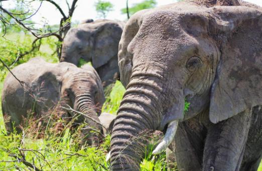 Kilimanjaro & safari small group tour for solo travellers