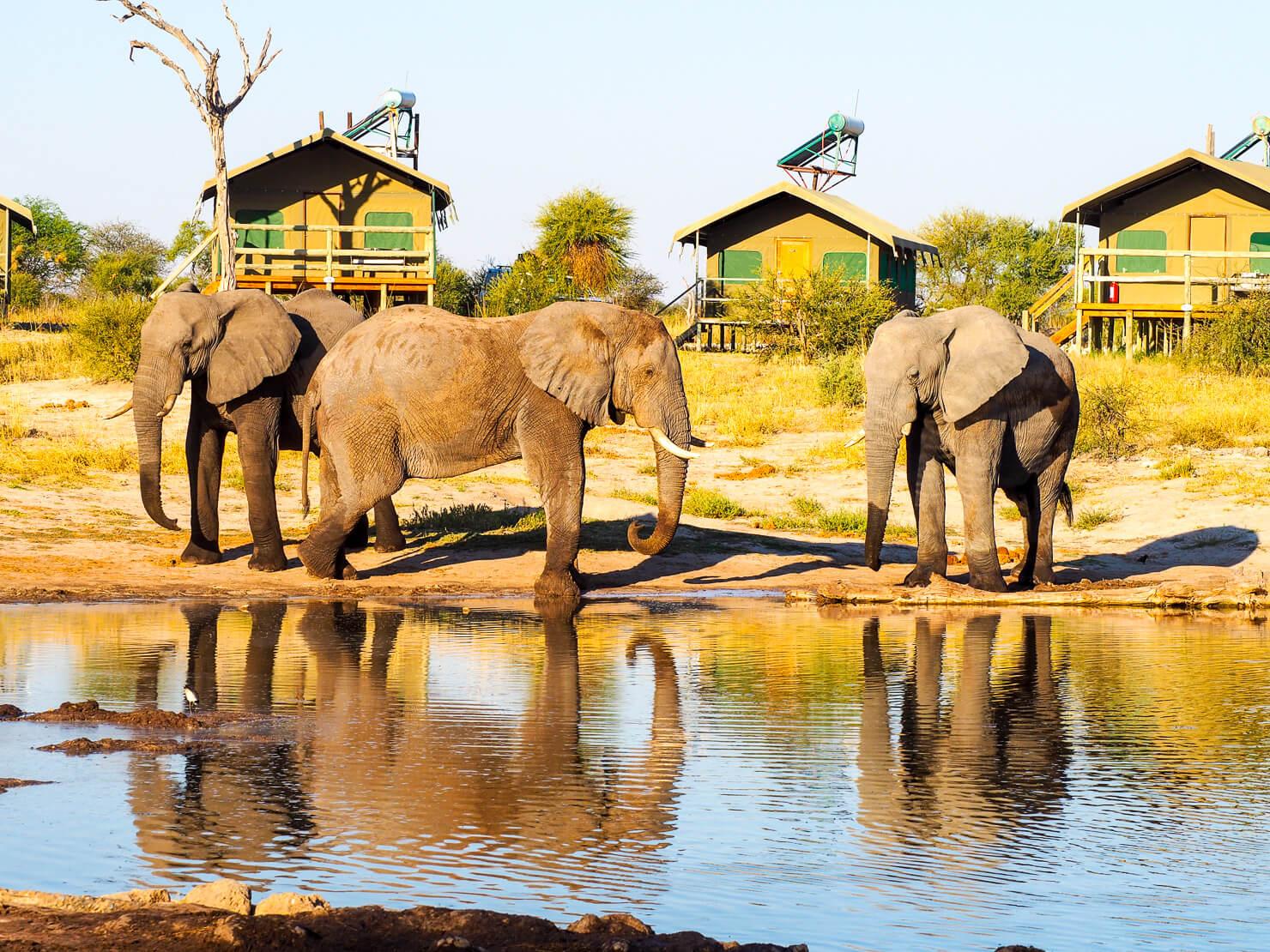 Elephant Sands, Botswana