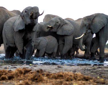 Senyati Safari Camp, Kasane, Botswana