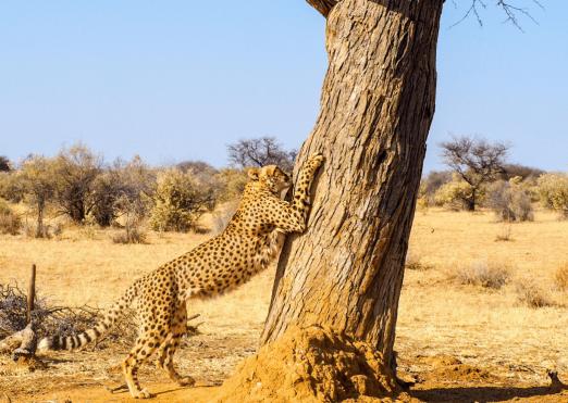 Rock My Namibia Adventure 101
