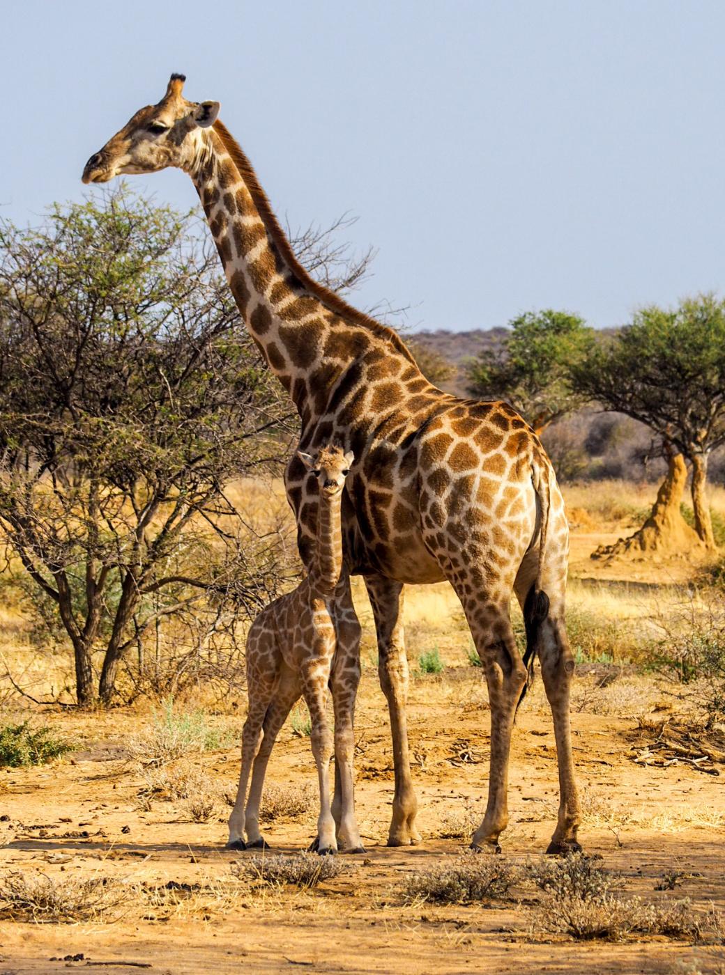 Okonjima Nature Reserve, Namibia