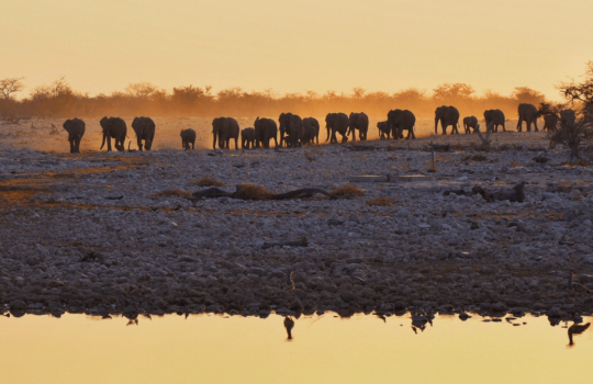 Okaukuejo Floodlit Waterhole - Things to Do in Namibia