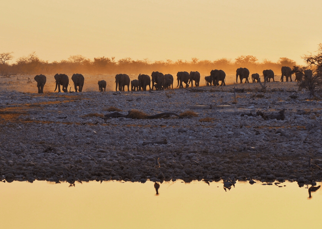 Okaukuejo Floodlit Waterhole - Things to Do in Namibia