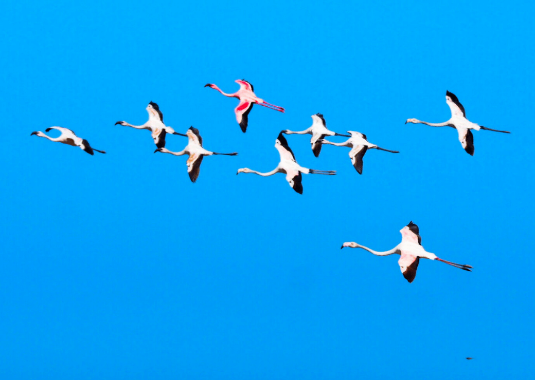 Flamingoes, Sandwich Harbour, Namibia