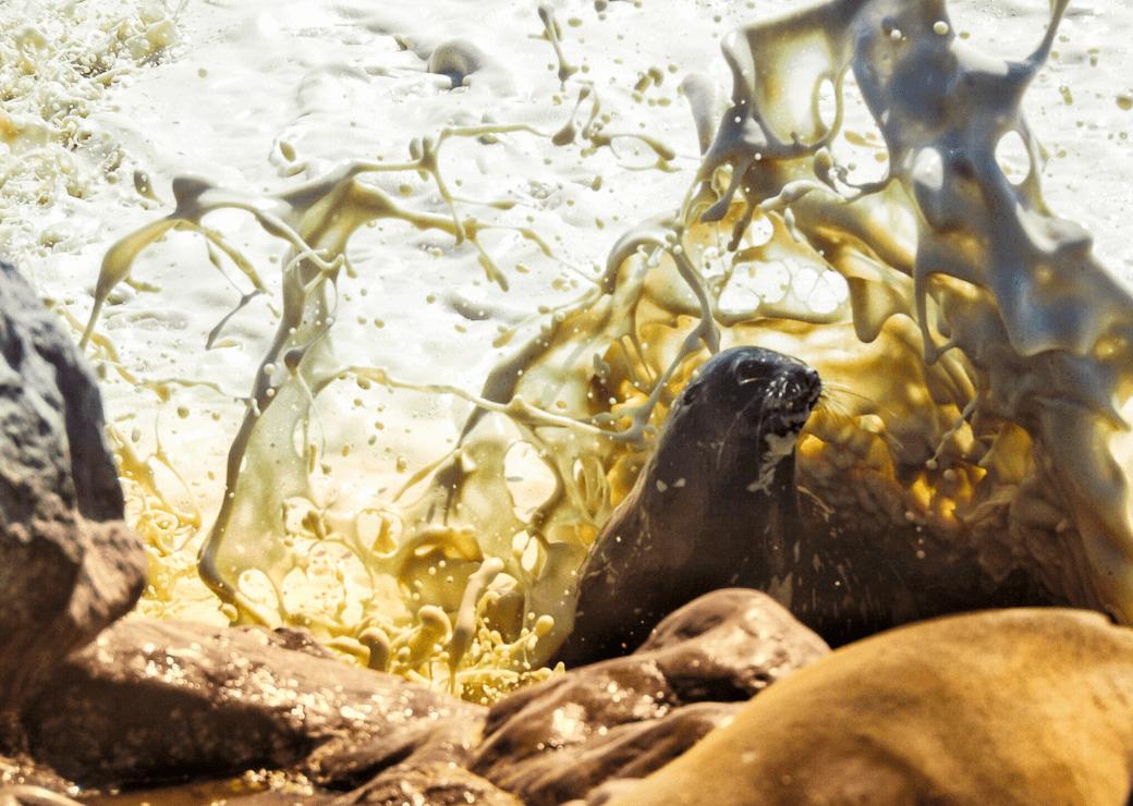 Cape Cross Seal Colony, Skeleton Coast, Namibia