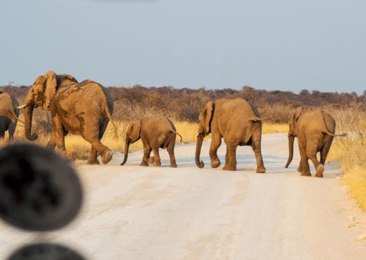 Rock My Namibia Adventure 92 (1)