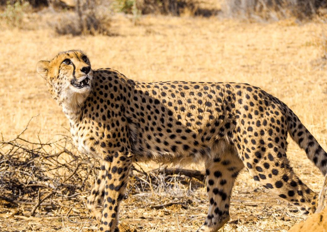 N/a'an ku sê Wildlife Sanctuary, Namibia