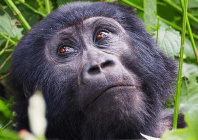 Rock My Uganda, Rwanda & DRC Adventure (1)