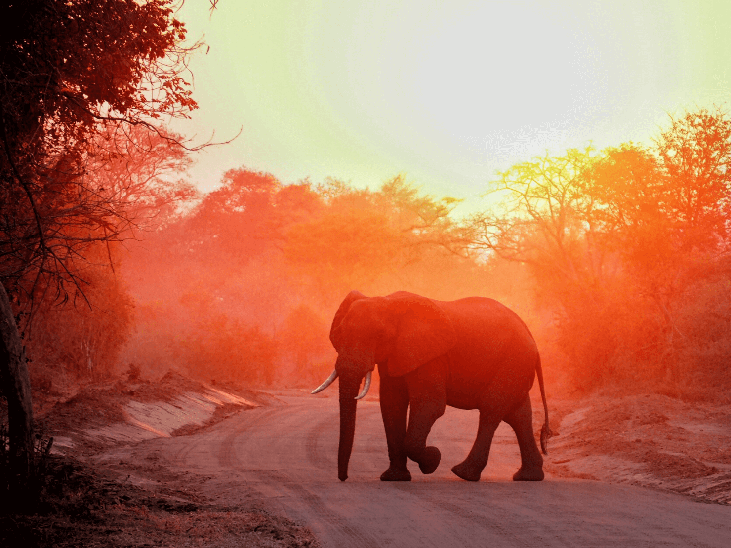 Best Places in Africa for Solo Travellers