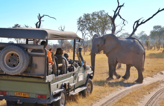 Safari in Botswana