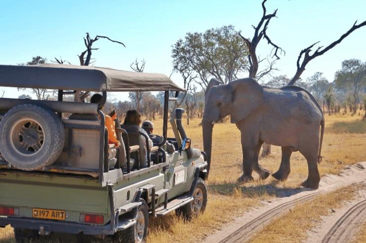 Safari in Botswana