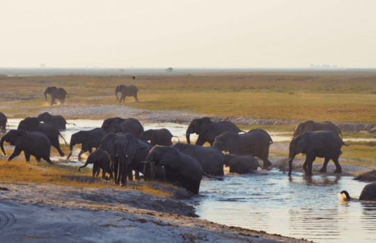 African Elephants - Helen in Wonderlust