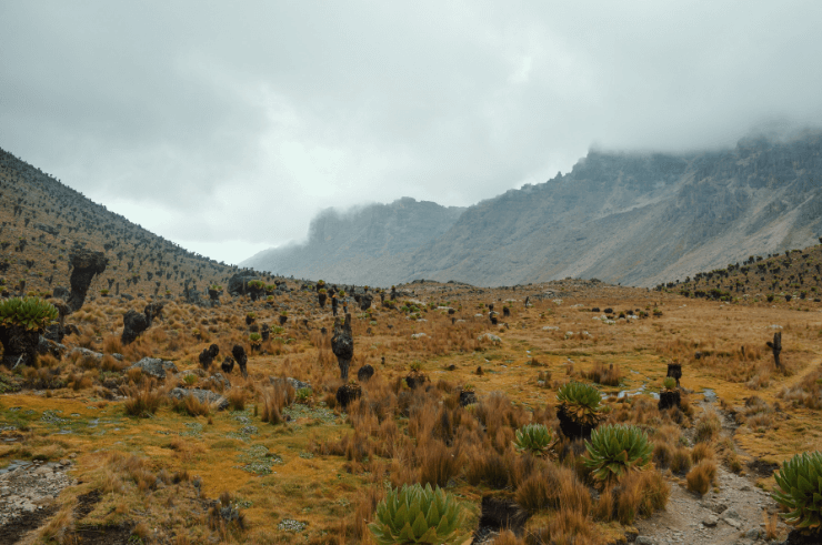 Mount Kenya National Park - Helen in Wonderlust